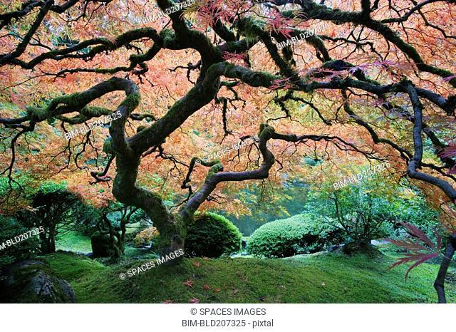 The Japanese Garden in Portland