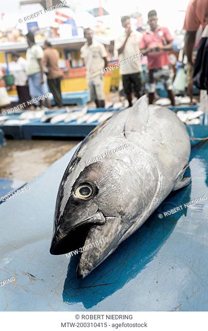 Tuna fish for sale at a market stall, Western Province, Sri Lanka