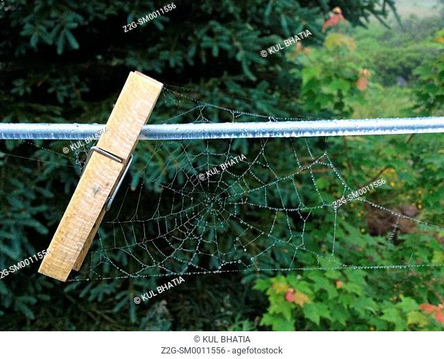 Dew drops cover a spider's web dangling from a clothesline, Halifax, Nova Scotia, Canada