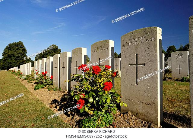 France, Pas de Calais, Loos en Gohelle, military cemetery of British soldiers, rose tree flowered in front of a grave