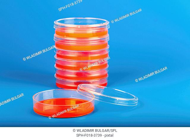 Petri dishes against blue background