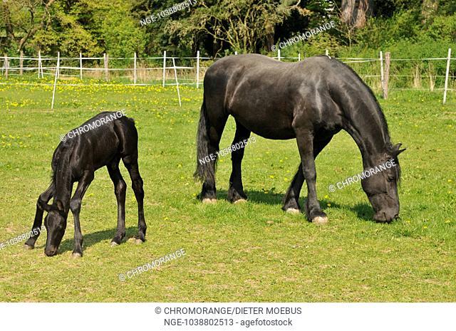 fries horses
