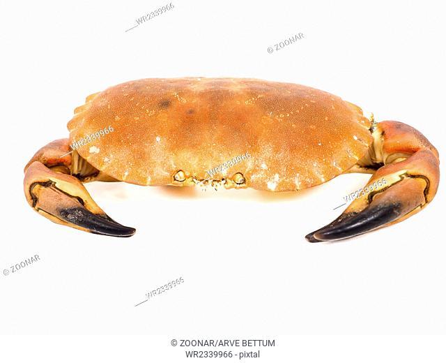 Boiled orange color crab