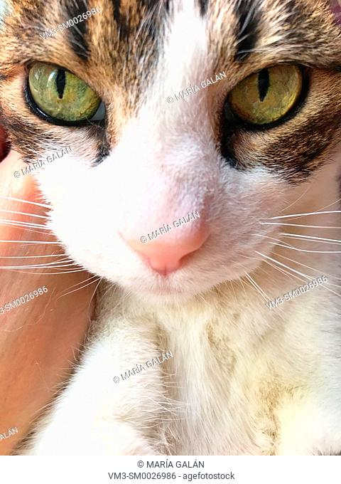 Tabby and white cat' s face. Close view