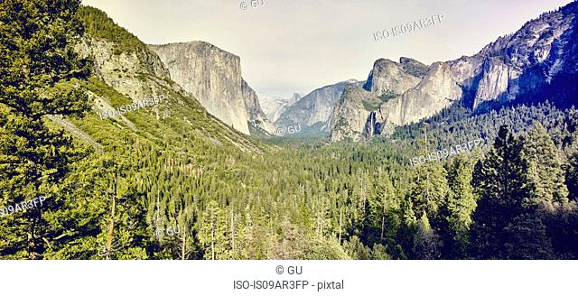 Mountains and forest, Yosemite National Park, California, USA