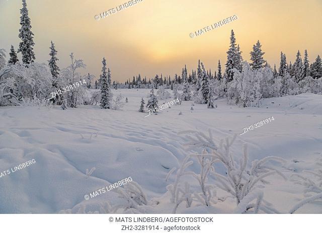 Landscape in winter season, sun behind clouds making the sky orange, nice colorful sky, Gällivare county, Swedish Lapland, Sweden