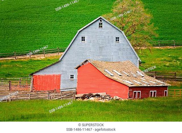 Barns in a field, Pullman, Palouse Region, Spokane, Spokane County, Washington State, USA