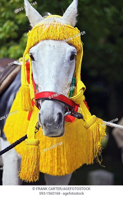 A head shot of a horse in the Jidai Matsuri