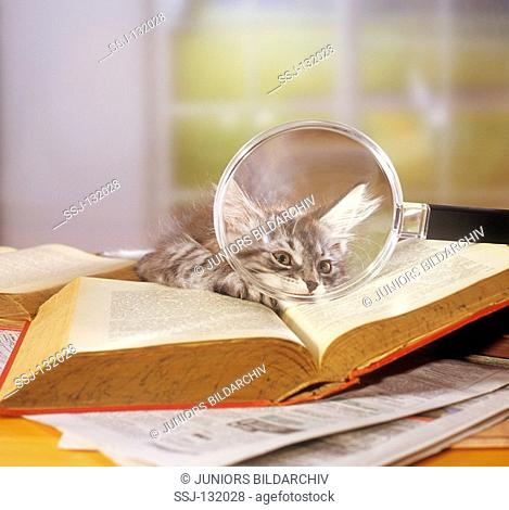 cat with book and magnifying glass restrictions:Tierratgeber-Bücher / animal guidebooks, puzzles worldwide, mobile phone content worldwide