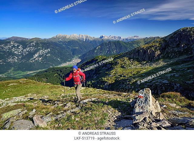 Woman hiking with view to Latemar range, Rosengarten, Langkofel and valley of Predazzo, Trans-Lagorai, Lagorai range, Dolomites
