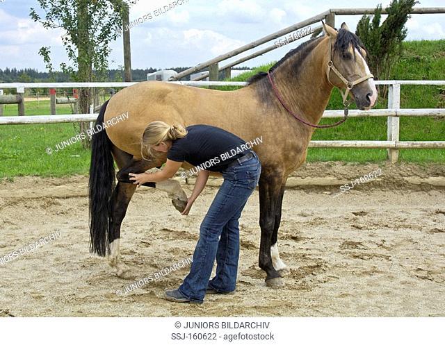 veterinary: Lusitano horse - Manual therapy