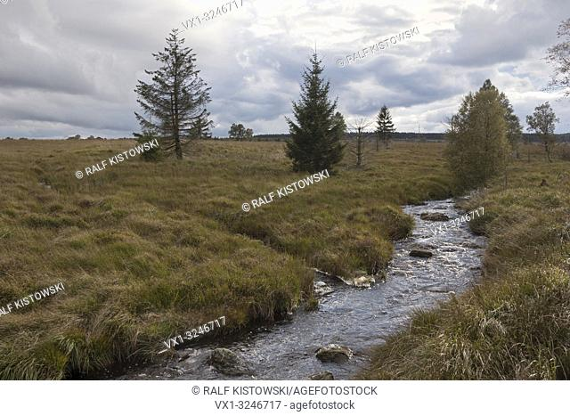 High Fens, a raised bog in the Eifel, with river Hill, famous nature reserve on the border of Belgium and Germany