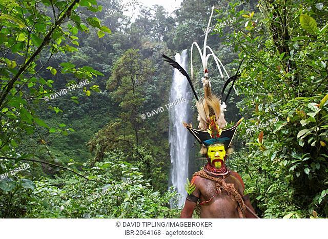 Timan Thumbu, a Huli Wigman, with headdress containing Superb Bird of Paradise, Papun Lorikeet, Lesser Bird of Paradise, Ribbon-tailed Astrapia