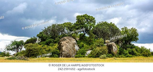Rock outcrop near Ngong Rocks (rock). Central Serengeti National Park. Tanzania