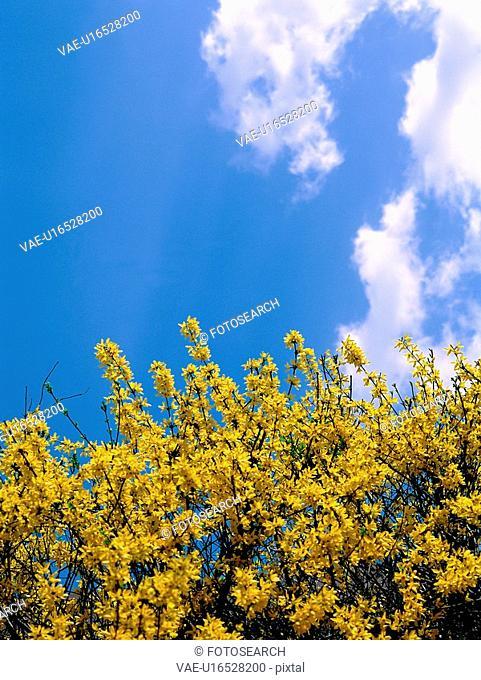 flower, sky, plant, nature, cloud, film