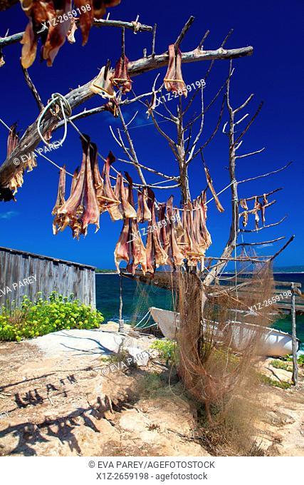 Peix Sec fish, drying down the sun in the pier of Es Torrent de S'Alga. Formentera (Balearic Islands)
