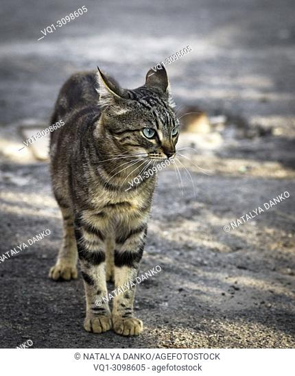 street young gray tabby cat walking along the street in the summer day.  New Image D