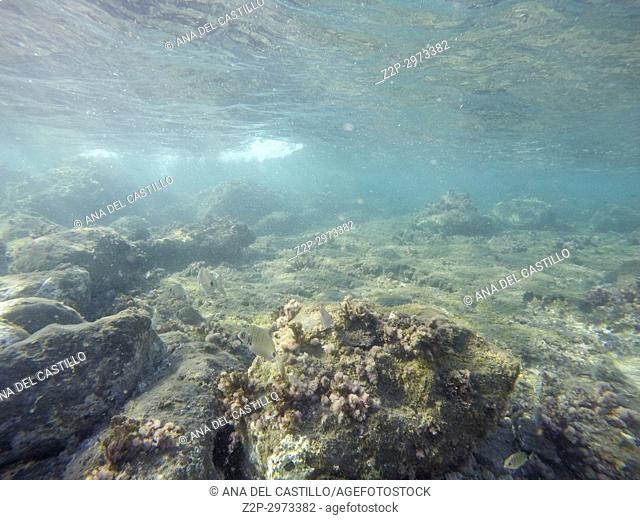 Underwater image in Cabo de Gata nature reserve in Almeria, Andalusia, Spain
