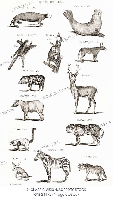 Different types of Quadrupeds. From an 18th century print
