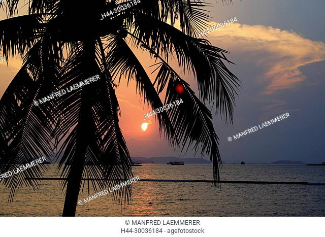 Asia, Thailand, Pattaya, palm in the sundown