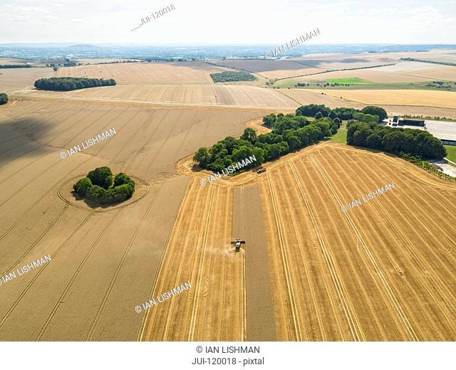 Harvest aerial landscape of combine harvester cutting summer wheat field farm crop