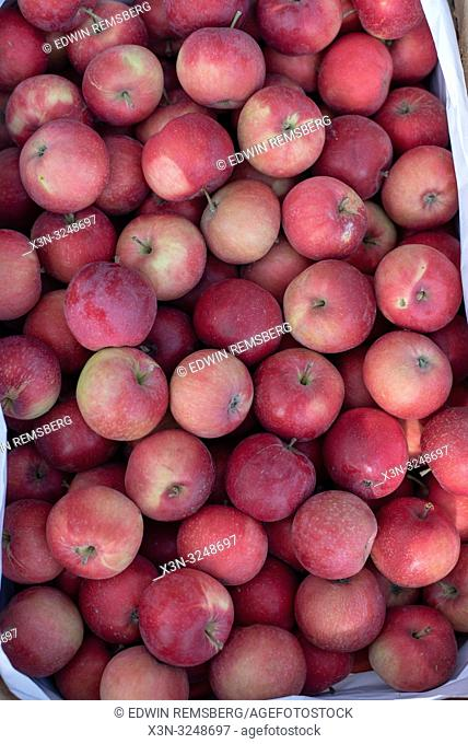 Overhead close up shot of a bin full of apples (Malus pumila) at the Bronisze Wholesale Market - one of the biggest fruits and vegetables markets in Poland