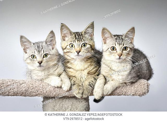 Portrait of three kittens