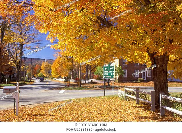 maple tree, fall, Hancock, NH, New Hampshire, Colorful maple trees along a road in the town of Hancock in the autumn
