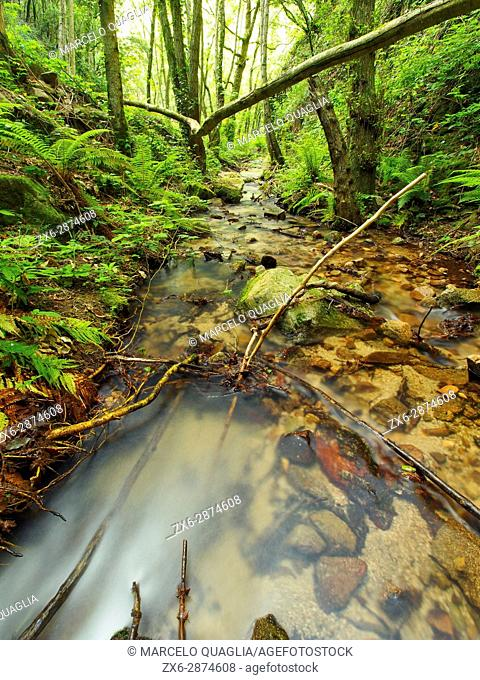Sot de L'Infern stream site. Arbucies village countryside. Montseny Natural Park. Barcelona province, Catalonia, Spain