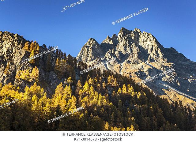 Swiss alps mountains with larch trees in the autumn season near the Julier Pass, Switzerland, Europe
