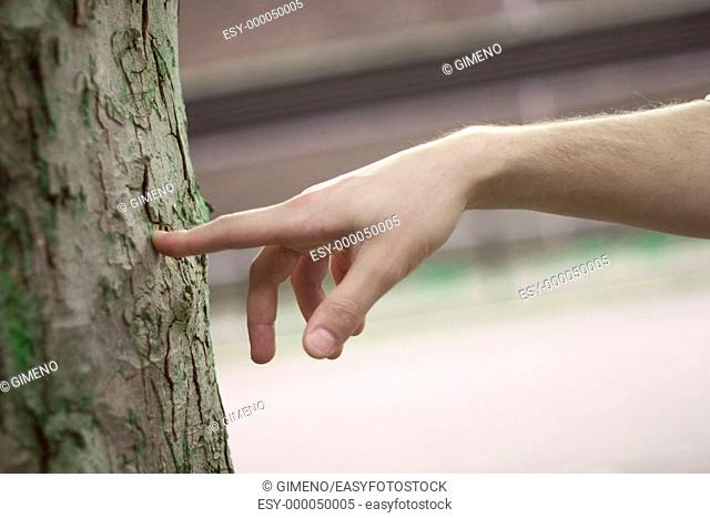 Hand touching a trunk
