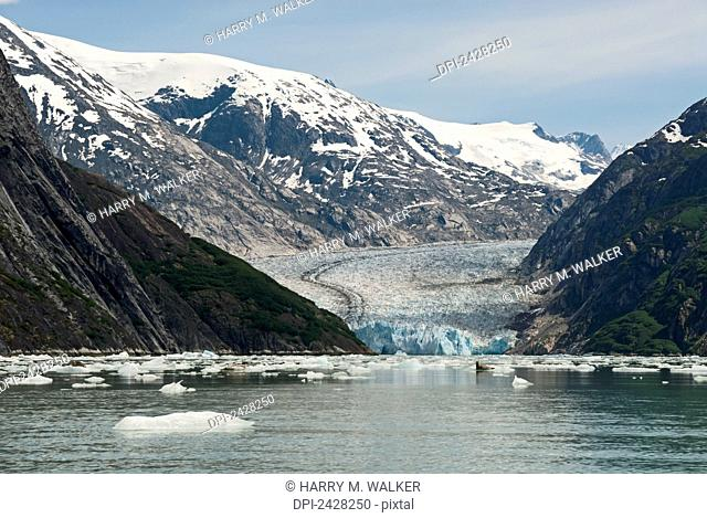 Dawes Glacier in Endicott Arm of Tracy Arm-Fords Terror Wilderness with Coast Mountains and harbor seals (Phoca vitulina) visible on icebergs in foreground;...