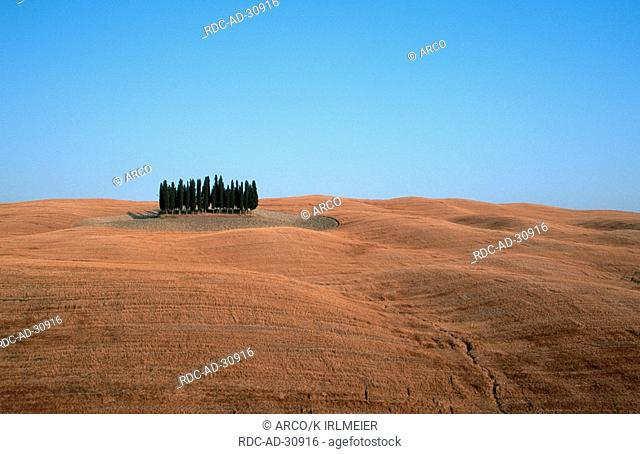 Stubble fields and Italian Zypresses San Quirico Tuscany Italy Cupressus sempervirens