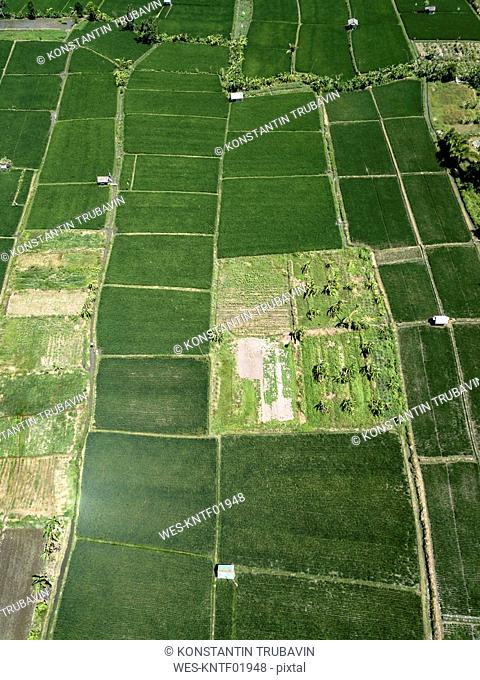 Indonesia, Bali, Aerial view of Sanur, rice fields