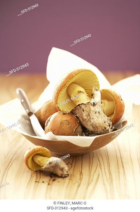 Several Caesar's mushrooms with knife in a wooden bowl
