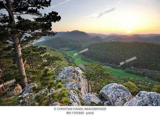 Black pine and Peilstein mountain faces in the evening light, Triestingtal valley, Lower Austria, Austria, Europe
