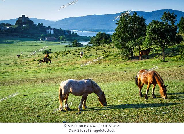 grassland and horses. Nanclares de Gamboa, Ullibarri-Gamboa reservoir. Alava, Basque Country, Spain, Europe