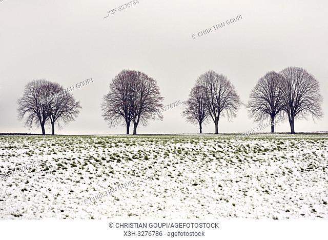 paysage de la Beauce en hiver, departement d'Eure-et-Loir, region Centre-Val de Loire, France, Europe/landscape of Beauce in winter, Eure-et-Loir department