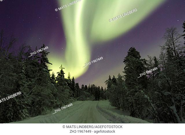 Aurora borealis, Northernlight over winter forestroad with snow on the trees in Gällivare in Swedish lapland