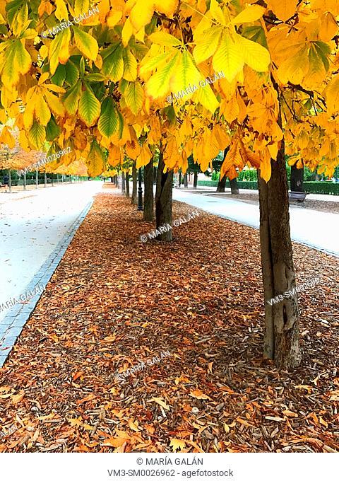 The Retiro park in Autumn. Madrid, Spain