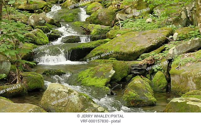 Stream, Great Smoky Mountains NP