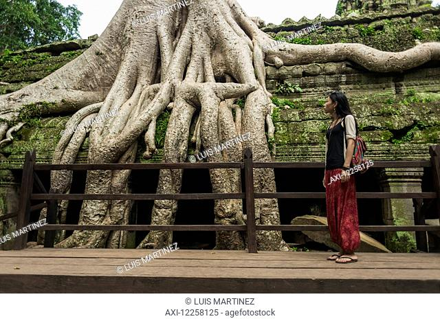 Ta Prohm, impressive temple in Angkor area built in twelfth century; Siem Reap, Cambodia