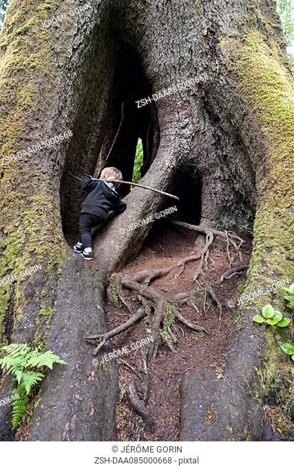 Child exploring hollow Sitka spruce trunk