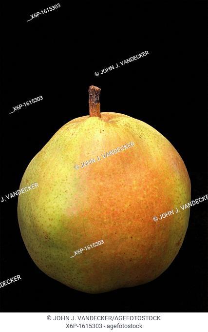 Still life of a Comice Pear