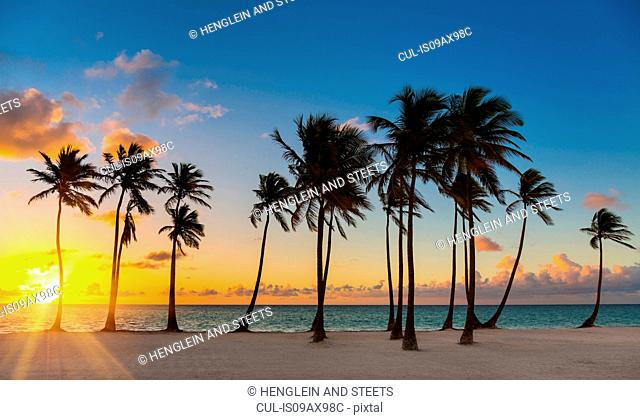 Row of silhouetted palm tree's at sunset, Dominican Republic, The Caribbean