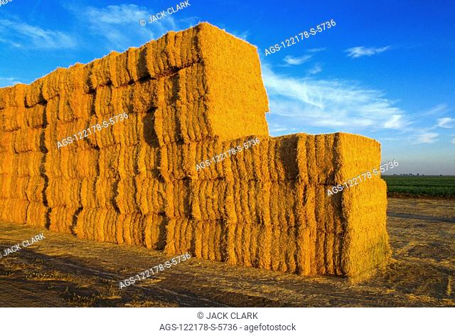 Agriculture - Stacked half ton, four strand bales of alfalfa hay / CA