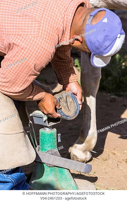A horseshoer (blacksmith) shoeing a horse, California, USA