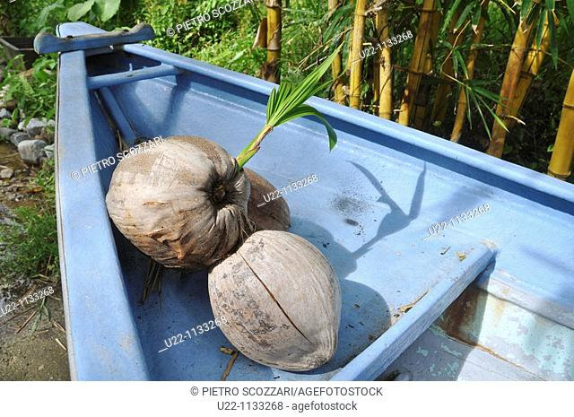 Tioman (Malaysia): coconuts in a boat at Salang Beach