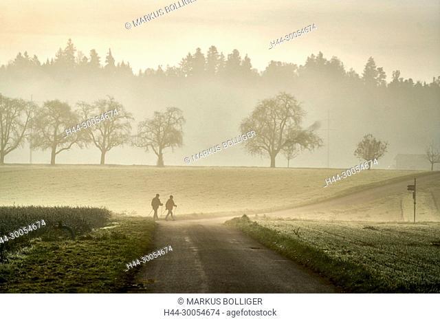 walking, autumn, traveller, scenery, fog, way, pair, trees, avenue, morning mood