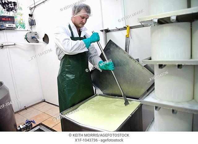 Making Caws Cenarth welsh farmhouse cheese - stirring the curds in vat, west wales UK